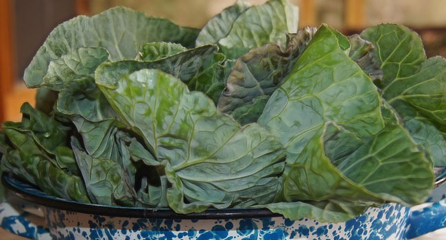 Benefits of Collards