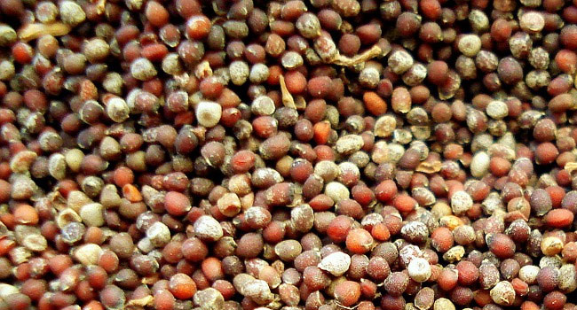 Benefits of Mustard Seeds